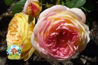 rozoman-ganon2
